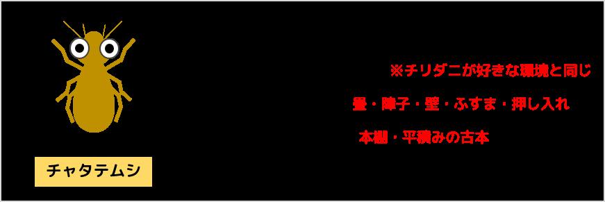 チャタテムシの特徴