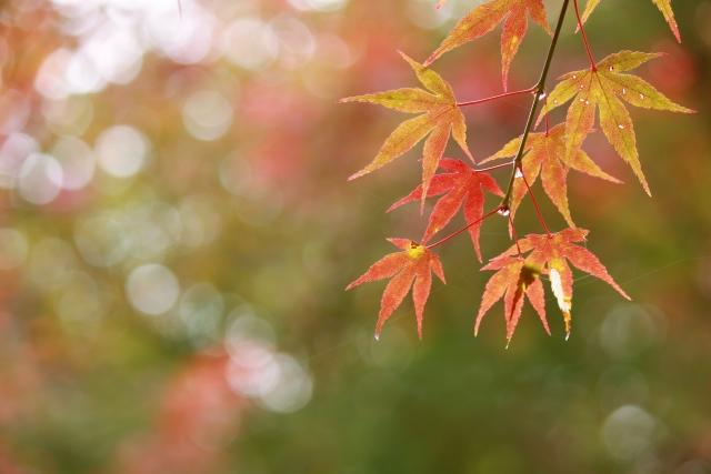 秋雨の画像