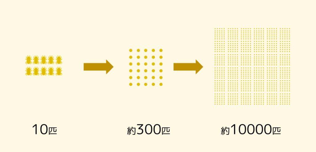 ダニの繁殖スピード