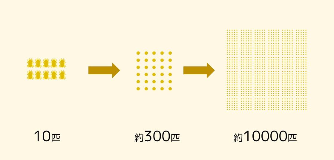 ダニが3ヶ月で1万匹に増える図
