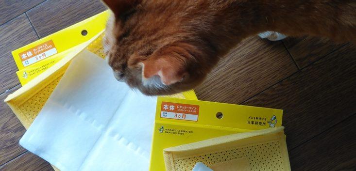 猫がダニ捕りロボを見学