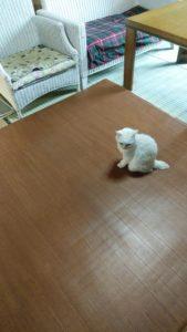 ダニ捕りロボを探す猫