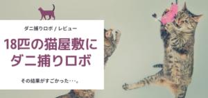 danirobo-cat-review